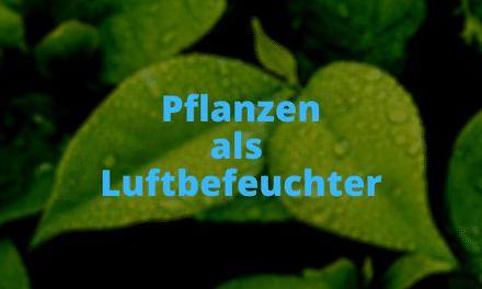 Pflanzen als Luftbefeuchter