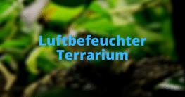 Luftbefeuchter Terrarium